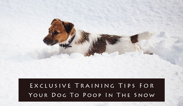Exclusive Training Tips For Your Dog To Poop In The Snow Budget